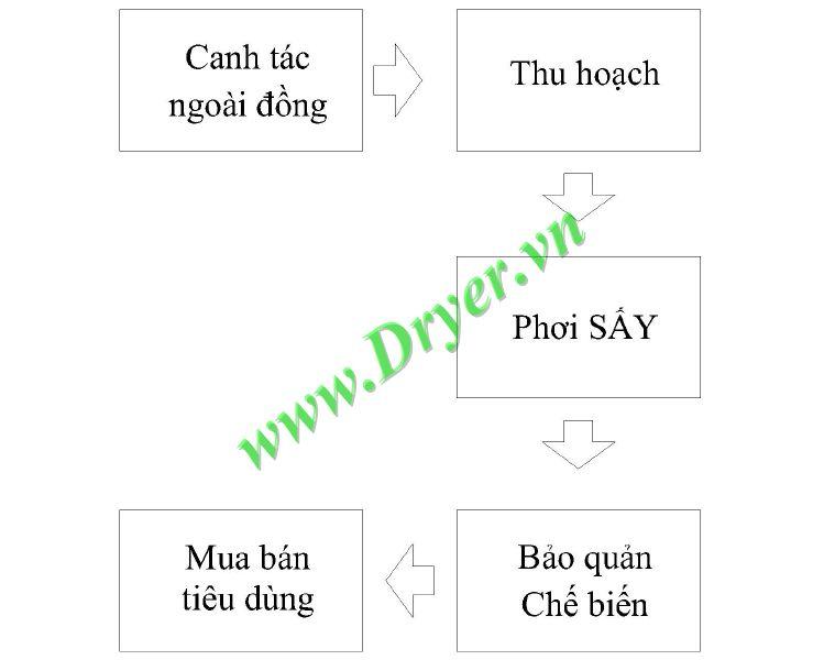 Hình 1: Các công đoạn sản xuất lúa gạo